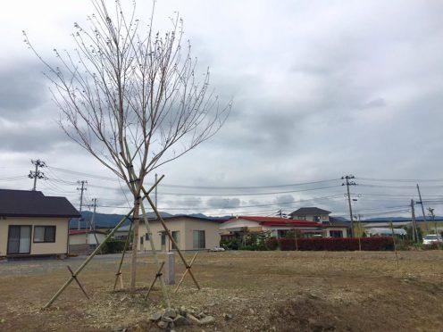 yachichiku02